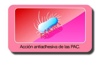 Los compuestos de arándano rojo con altas dosis de PACs ayudan a prevenir la cistitis